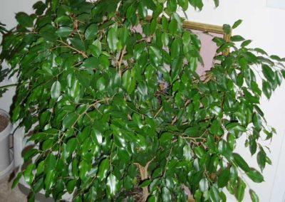 PLANTES 16